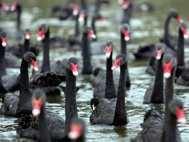 its-never-been-more-expensive-to-protect-your-assets-against-a-black-swan